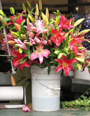 Bulk Flowers Wholesale flowers mn Buy Bulk Flowers minneapolis