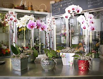 Orchid Plants How To