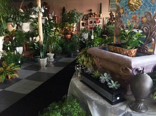 Our green houseplants at our shop
